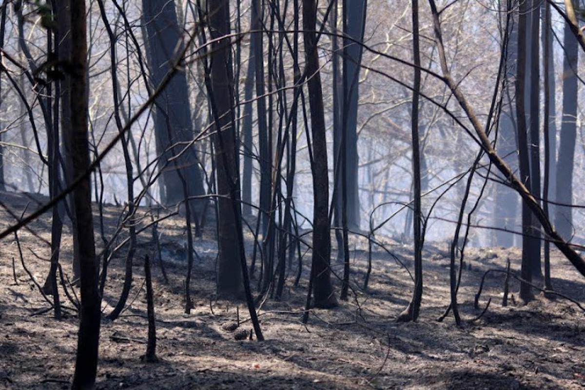 O monte nas Fragas, arrasado polo lume
