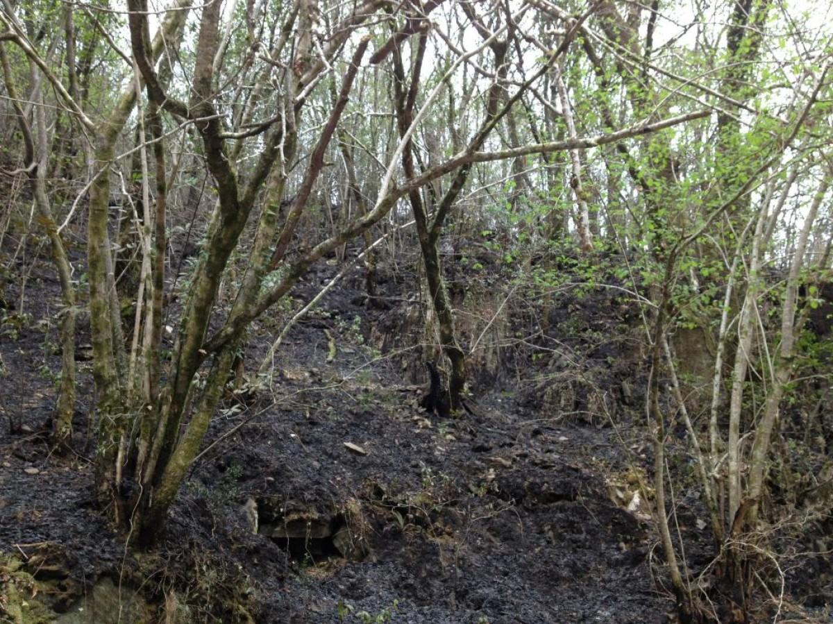 Na zona de bosque atlántico o lume afectoulle principalmente ao chan