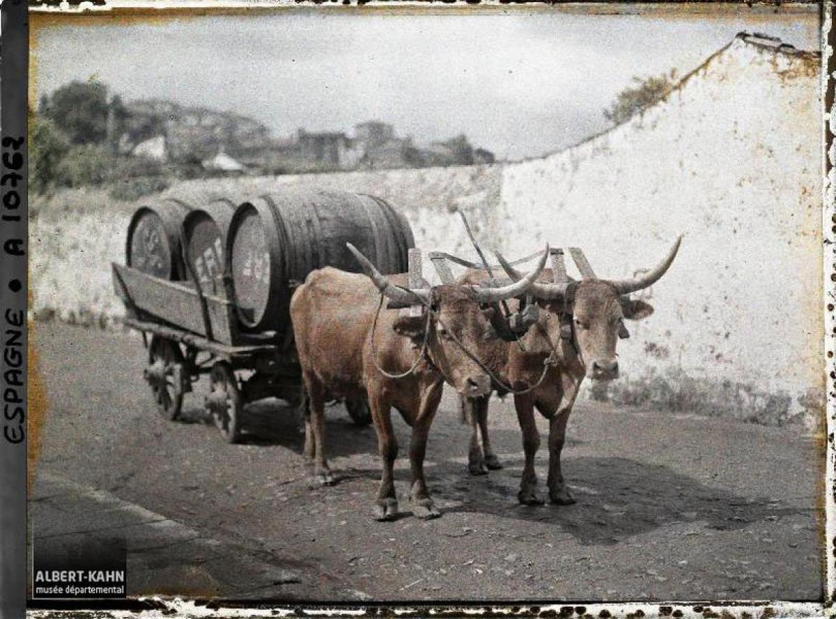 Carro de bois, Santiago de Compostela (1917)