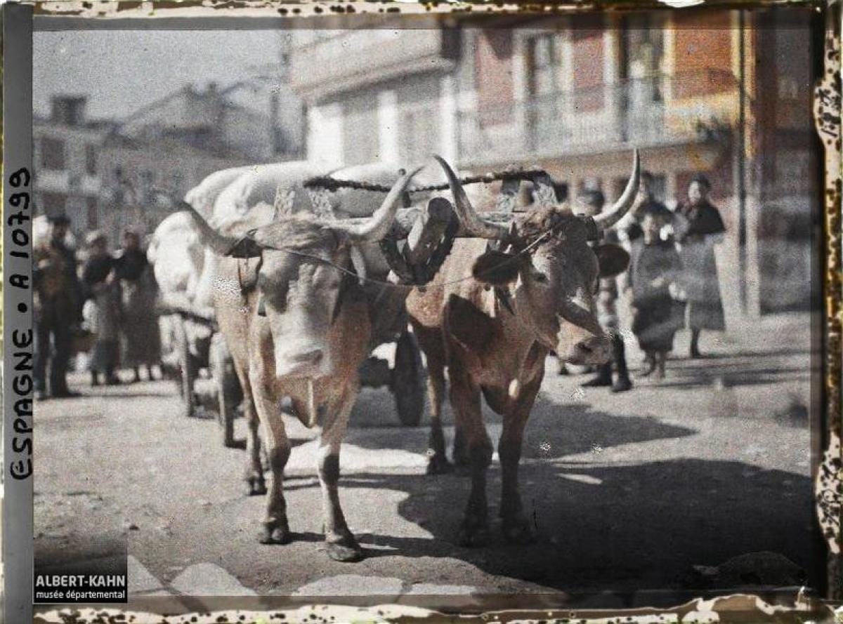 Carro de bois, A Coruña (1917)