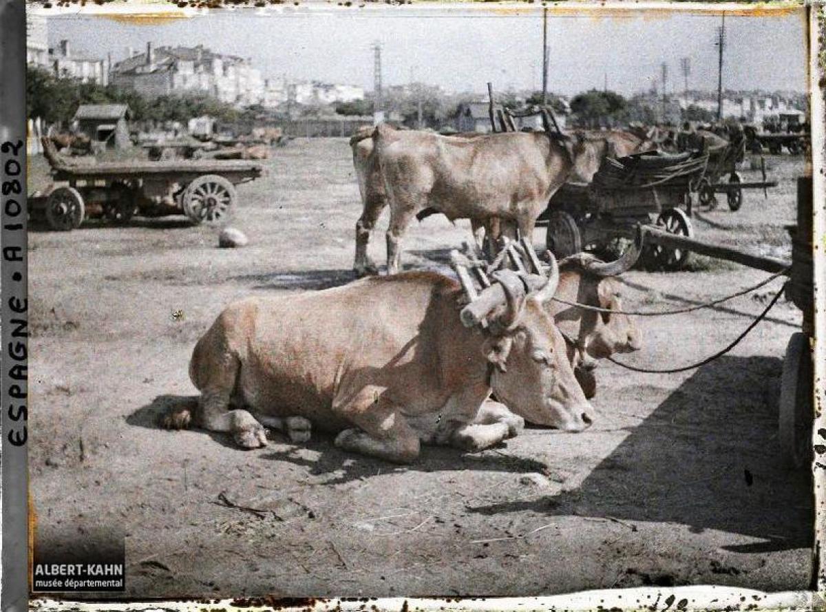 Bois de carga no Porto da Coruña (1917)
